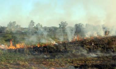 Charla abierta: Ley de humedales e incendios forestales