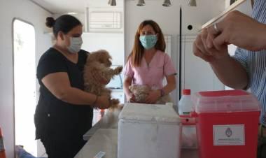 Continúa la vacunación antirrábica de mascotas