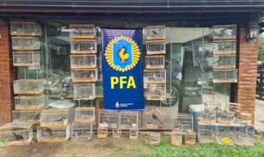 La Policía Federal rescató en Cañuelas y en la región aves valuadas aproximadamente en un millón de pesos