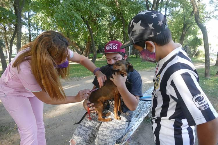 Continúan los operativos de vacunación de mascotas